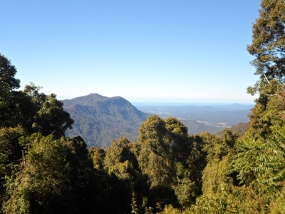Dorrigo national park glades picnic area view