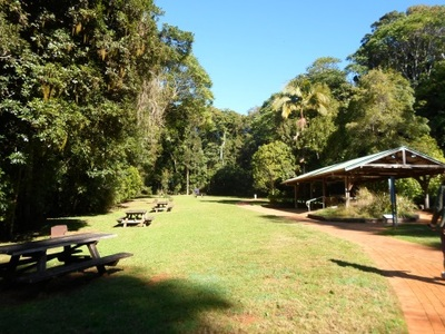 Dorrigo national park glades picnic area