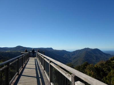 Dorrigo national park skywalk