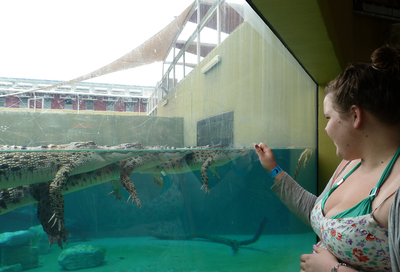 crocosaurus cove, swim with crocodiles, adventure, australian zoos, animals, thrill seeking