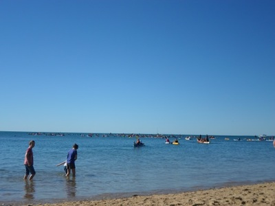 hervey bay whale festival, paddle out for whales, hervey bay events