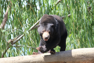national zoo and aquarium, canberra zoo, family activities in canberra, fun things to do in canberra, animals, aquariums, zoos, australian zoos