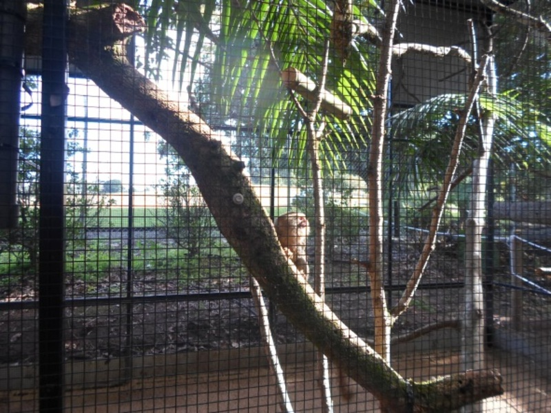 queensland zoo, big pineapple zoo, queensland zoo animals