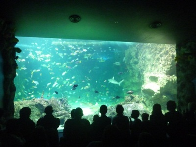 sea life, sydney aquarium, great barrier reef, daring harbour