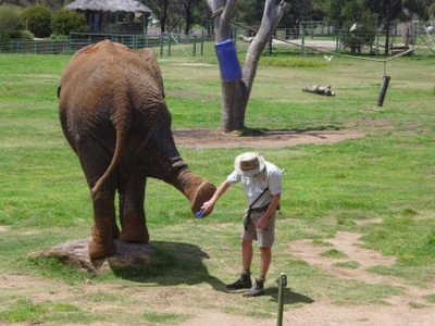 taronga, western plains, zoo, dubbo, elephant, keeper presentation