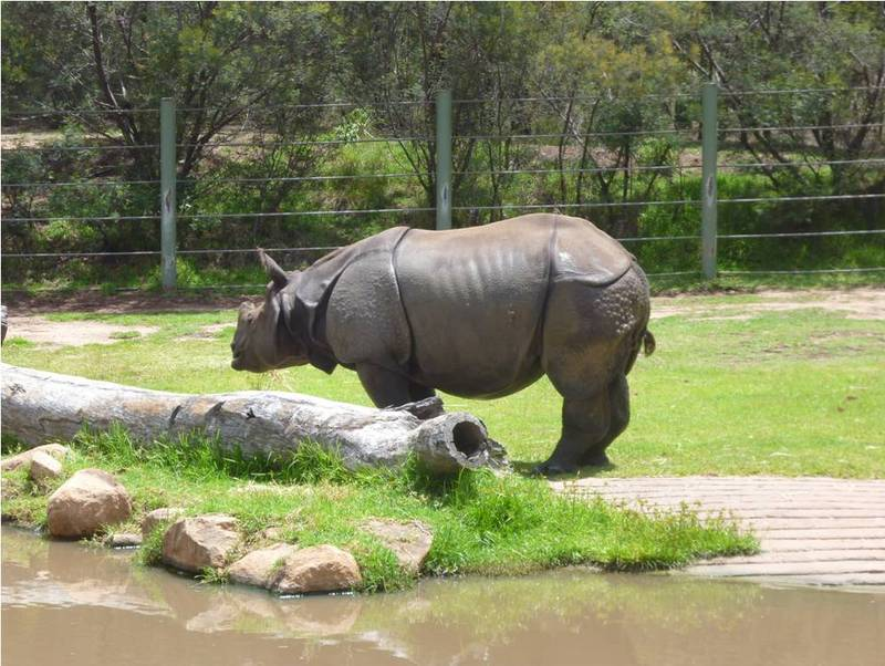 how to get to hunter valley zoo