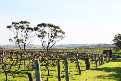 wineries, mclaren vale, mclaren vale wine region, wine in mclaren vale, south australian wine regions
